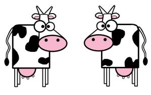 cows-151944_640